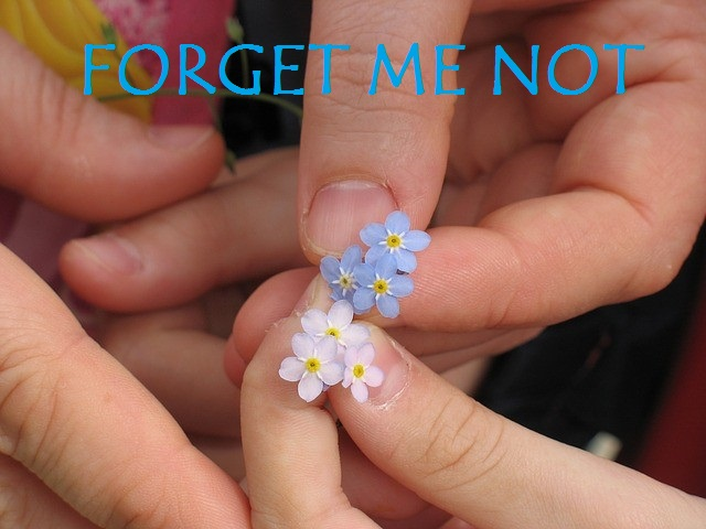 forget-me-not-1222341_640 - with text